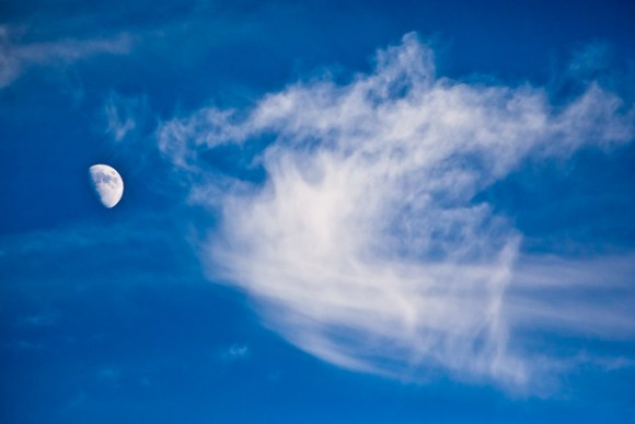 Moonrise over Safari West