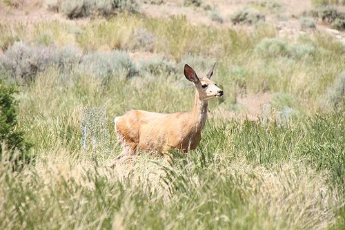 Deer outside Wyoming State Penitentiary