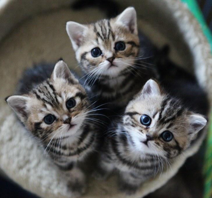 「猫 フリー画像」の画像検索結果