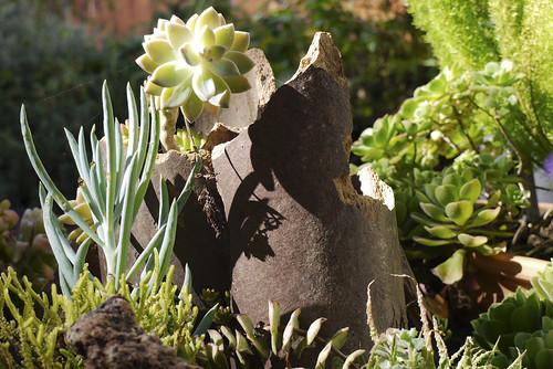 my succulent garden September 2010