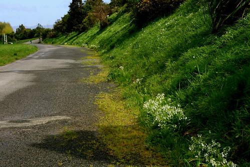Saturday: Spring walk