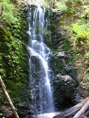 Big Basin/Berry Creek Falls