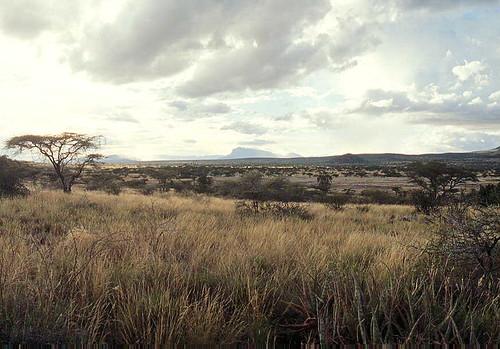 Savanna grasslands of East Africa