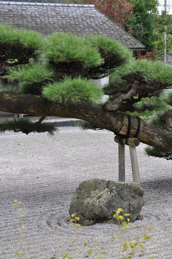 念珠の松庭園~山形県鶴岡市