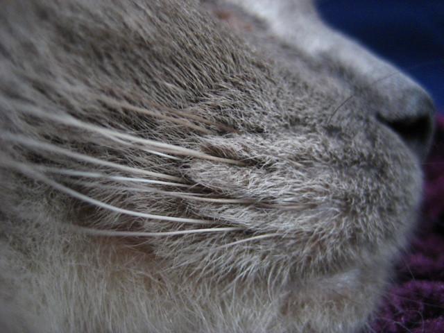 Whiskers of Steel