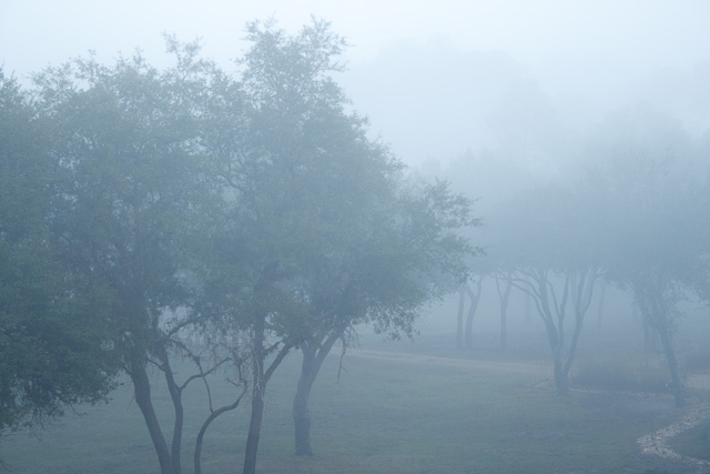 Morning mist covers the Savanna at Disney's Animal Kingdom