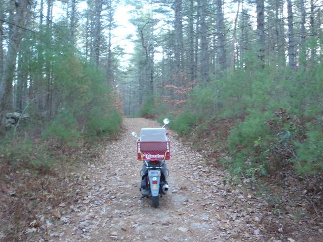 Buddy on Breakheart Pond Trail
