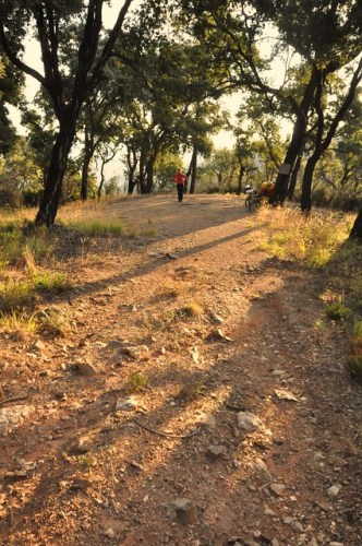 Wild camping in the enchanted forêt des Maures