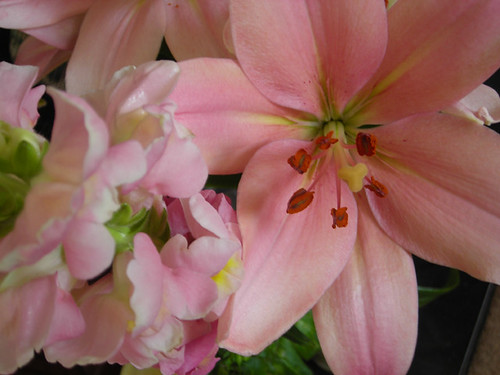 Pink Lilies 01
