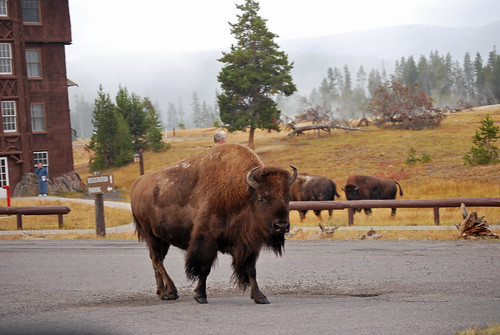 USA_192_Yellowstone_110