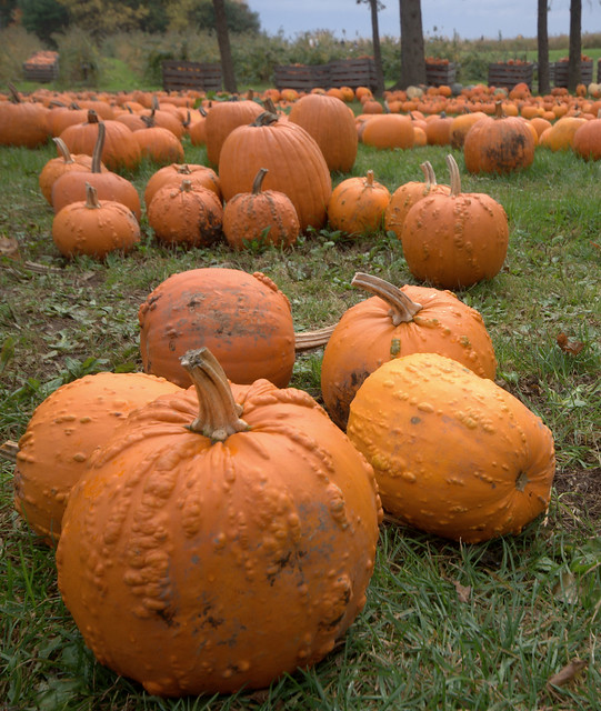 ...I agree...these pumpkins do look like they have a skin disorder...