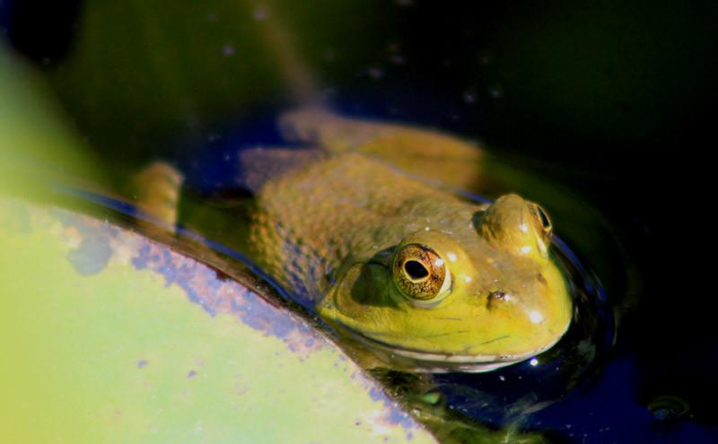 Frog Peering