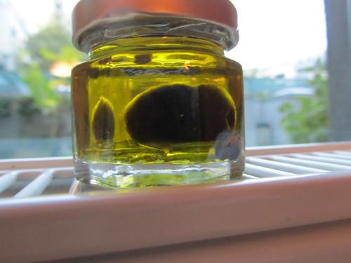 Olivenernte 2010
