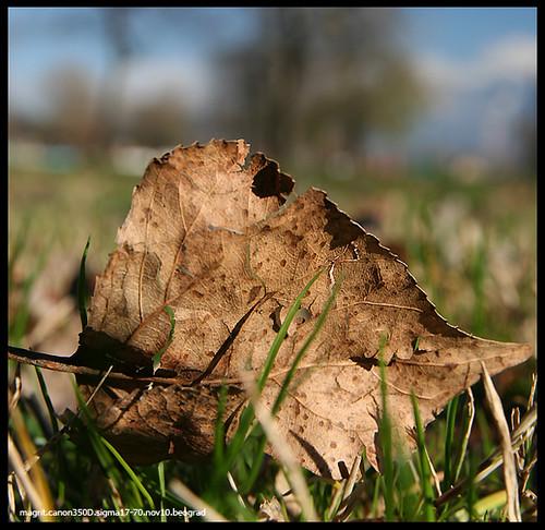 late november leaf
