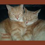 Tigger & Hobbes