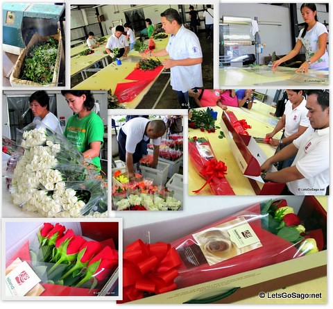 How Island Rose flowers are harvested, arranges and packed