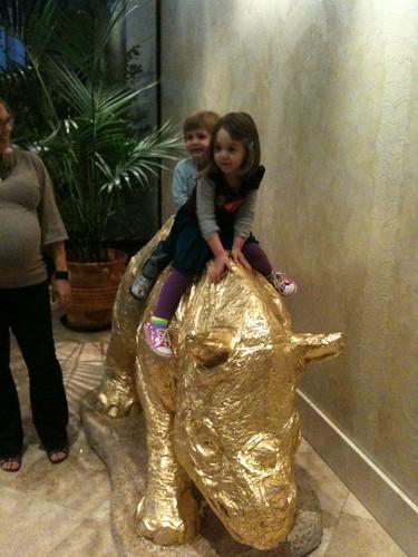 Rhino riding