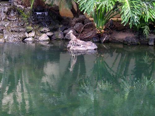 fishing bird is fishing