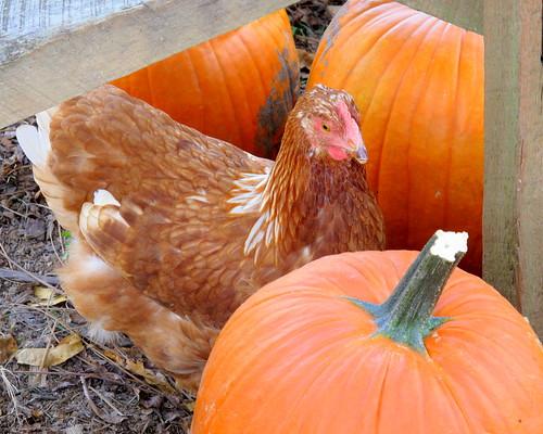 ck + pumpkins