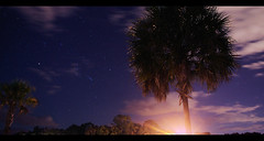 Palm thanksgiving stars