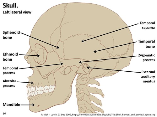 axial skeleton skull diagram basic electrical wiring diagrams lateral view with labels part 2 visual atlas page 16