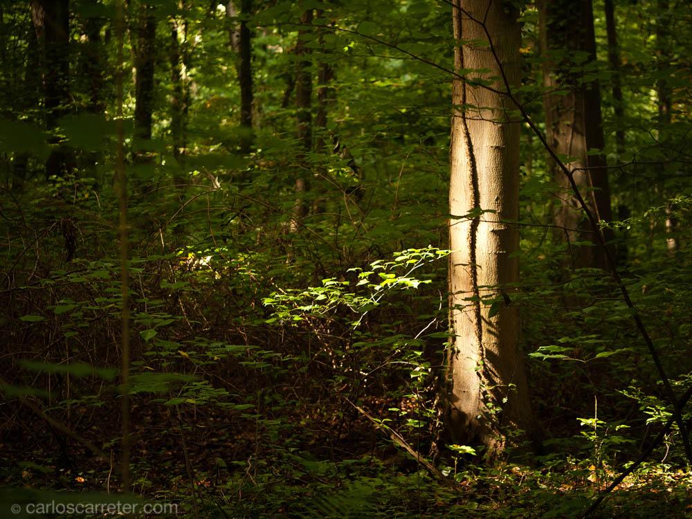 Augustusburg - bosque