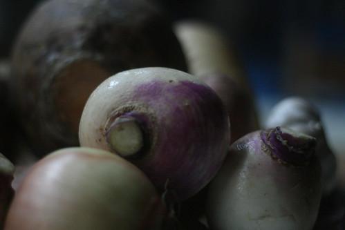 the glorious turnip.