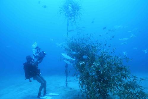 海洋臺灣的真性情 | 臺灣環境資訊協會-環境資訊中心