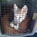 Sirhan the wolfdog as a puppy, Animal Advocates