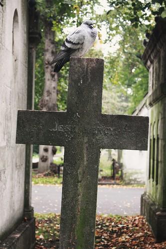 Bird and Cross
