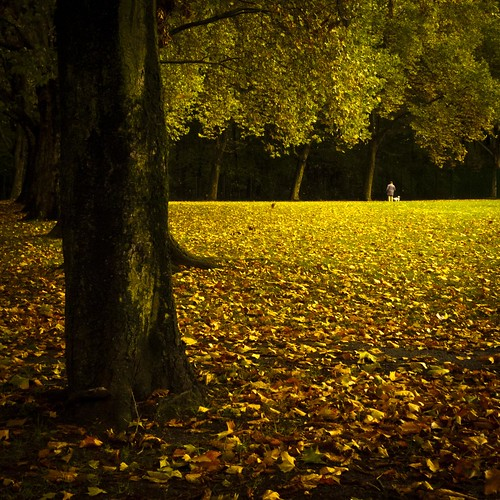 Autumn Fantasy : Mille-Feuille of Gold - Photo : Gilderic