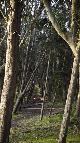 the Wood Line, by Andy Goldsworthy in the Presidio, San Francisco
