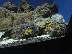 夜探台灣水域館:像石頭的魚