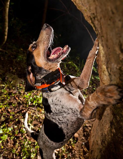 Barking up the tree.