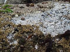 damaged barnacles