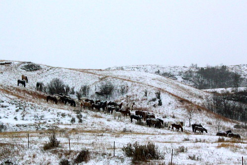 November 21, 2010. Horses in Badlands