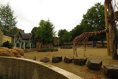 373 - 2017 07 01 - Giraffen- en zebra Savanne