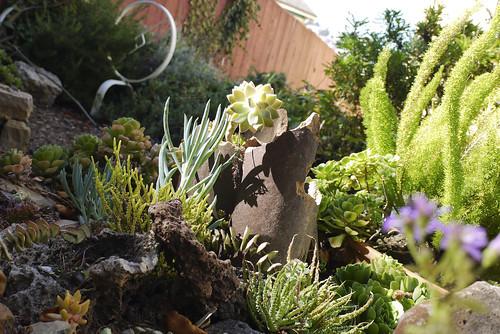 my succulent garden, September 2010