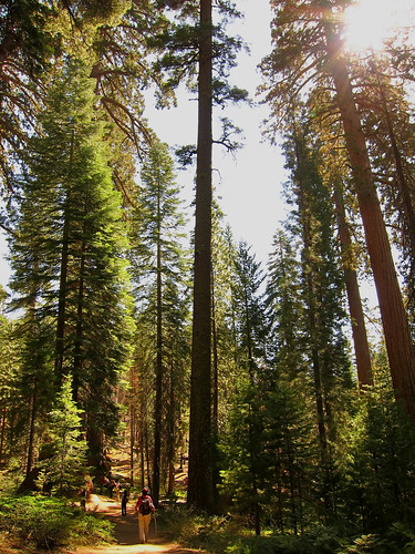 Big and Small, Mariposa Grove
