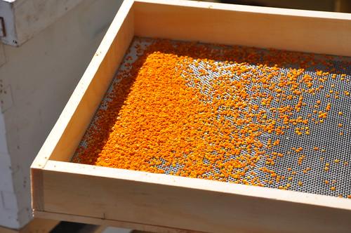 Pollen pellets!
