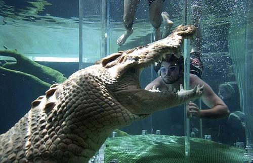 crocosaurus2