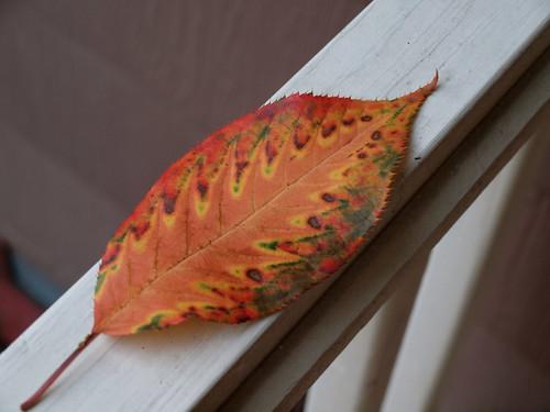 pretty leaf!