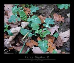 LeicaDigilux2_2