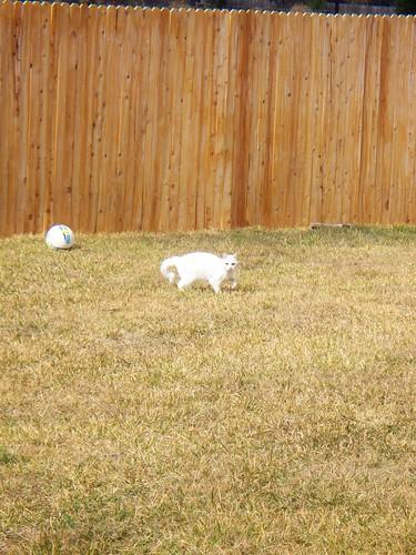 Belle in the Backyard