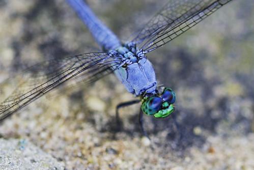 Nature's Aviators
