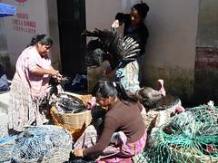 Truthahn-Verkaeuferinnen, Markt Chichi