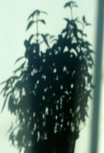 365-305 Celebrating Shadows