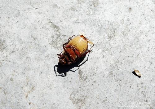 尼就是被這種蟲攻擊。這是他朋友的遺體...RIP.