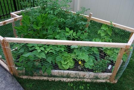 Garden mid-July