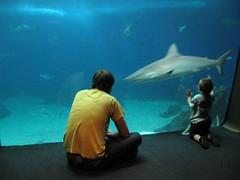 the shark tank